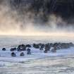 A flock of geese huddles to stay warm on a slab of ice enveloped by steam on the Rock River in Watertown, Wis. as arctic air pushes through the Upper Midwest on Tuesday, Jan. 22, 2013.  The upper Midwest region is grappling with another day of extreme cold.  (AP Photo/Watertown Daily Times, Samantha Christian)
