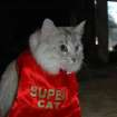 """Super Cat"" (aka Allie) discovered that her cape could conveniently double as a bib.  Community Photo By:  Ann Saxton  Submitted By:  Ann, Oklahoma City"