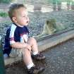 Two Young Lions.  18-month old Jacob Ervin enjoyed his recent day at the zoo and his special visit to the new Oklahoma City Zoo lion cubs.  Community Photo By:  Sandy Jones  Submitted By:  Sandra, Oklahoma City