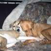 Whisper and Maya. I adopted Whisper the whippet (left) on the 5th of January 2007 from Second Chance Animal Sanctuary in Norman. I found Maya the lurcher (right) on Labor Day 2004 on a street in SW Texas when she was about 4 weeks old. They went along great from the very first day, and always sleep together either hugging like in this picture or curled together. Sometimes they are just so cute I HAVE to take a snapshot.  Community Photo By:  De  Submitted By:  D, Midwest City