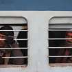 Indian passengers sit inside a train after services were temporarily interrupted because of fog, in Jammu, India, Sunday, Dec. 30, 2012. North India continues to face extreme weather conditions with dense fog affecting flights and trains. (AP Photo/Channi Anand)