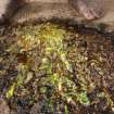 In this photo taken Monday  Jan. 7, 2013, the insides of harvested worms lay at the feet of Sihle Nkomo as the harvested mopane worms are prepared for the market by squeezing their insides out before being dried, in Gwanda, Zimbabwe. In Zimbabwe as well as most parts of southern Africa, mopane worms are a staple part of the diet in rural areas and are considered a delicacy in the cities. They can be eaten dry, as crunchy as potato chips, or cooked and drenched in sauce. (AP Photo/Tsvangirayi Mukwazhi)