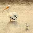 Big Legs and Little Legs... Pelican and Gull Together at Sunrise at the Great Salt Plains National Wildlife Refuge.  Community Photo By:  Michael Gross  Submitted By:  Michael, Oklahoma City