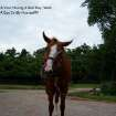 This is a picture of my horse Belle. We were trying to take a good picture but I guess she didn't want to.  Community Photo By:  Kelli Shene  Submitted By:  Kelli, Bethany
