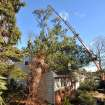 Luis Salinas of Green Mansion Tree Co. works to remove a tree from the roof of a home that had fallen early this morning as a result of high winds on Thursday, Jan., 31, 2013 in Sea Cliff, N.Y.  More than 100,000 homes and businesses are without power in Connecticut, Rhode Island and upstate New York. (AP Photo/Kathy Kmonicek)