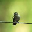 Humming Bird on a Wire at Martin Nature Park  Community Photo By:  Michael Gross  Submitted By:  Michael, Oklahoma City