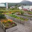 This Aug, 2012 photo shows the Historic Skagway Inn garden, where various vegetables, herbs and other ingredients are grown for use in cooking demonstrations at the Inn's restaurant, Olivia's, in Skagway, Alaska . The bed and breakfast in what was once known as