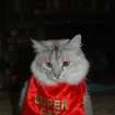 """SUPER CAT discovered that her cape could conveniently """"double"""" as a bib. (Allie)  Community Photo By:  Ann  Submitted By:  Ann, Oklahoma City"""