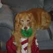 Baylee awoken from a nap with her toy laying on my OU jersey  Community Photo By:  Dean Southern  Submitted By:  Jenni, Bethany