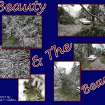 This collage represent the hundreds of photos taken of the beauty & the beast @ 2636 NW. 41st in Oklahoma City     But by the Grace Of Gods' Hand was the car spared damage from five different trees.        Now I Know The Reason Why I'm Here - Because Jesus Is Alive     Richard T. Clifton  phil.1:3-6     (405)942-3201  Community Photo By:  Richard T. Clifton  Submitted By:  Richard, Oklahoma City