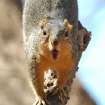 """Ok...I know you are saying """"NO MORE SQUIRREL PICTURES!!!! But you can't pass up this one from Martin Nature Park....Singing About Spring!  Community Photo By:  Michael Gross  Submitted By:  Michael, Oklahoma City"""