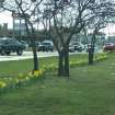 Daffodil Days are here!  Thanks to all the citizens, businesses, churches, schools and City employees who helped to make this event a success. The daffodils have begun to bloom throughout Warr Acres.  If you haven't noticed them yet, take a drive on NW 39th Expressway and look at the median.    Several businesses, individuals and organizations have donated funds to pay for the daffodil bulbs, and we want to express our appreciation to them.  A large amount of the expense was covered by a grant from the Oklahoma Centennial Commission, but did not provide enough to cover the number of bulbs ordered. If you would like to helf defray the cost please send your donation to Citizens for a Better Warr Acres, 6201 Roman Road,  Warr Acres, OK  73122  Community Photo By:  Darryl Goodman  Submitted By:  Darryl, Warr Acres