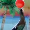 Addie, a sea lion at the Oklahoma City Zoo, jumps out of the water to touch a ball during training on Sunday, March 8, 2009. The sea lion shows begin this weekend. By John Clanton, The Oklahoman