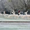 Iced Deer at Penn and Grand  Community Photo By:  Jim Allshouse  Submitted By:  Jim, Oklahoma City