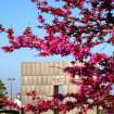 Red Buds in Bloom at the Oklahoma City Bombing Memorial  Community Photo By:  Michael Gross  Submitted By:  Michael, Oklahoma City