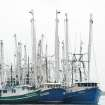 Shrimp boats float beside docks in Bayou La Batre, Ala., in this file photo from May 3, 2010. The seafood village made famous by the movie
