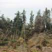 This Thursday, March 28, 2013 photo shows downed trees and shifted earth from Wednesday's massive landslide on Whidbey Island near Coupeville, Wash. Authorities spent the day assessing the damage and danger to homes remaining near the slide as nervous residents waited for more detailed information about how safe the area is. (AP Photo/Manuel Valdes)