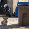 This photo taken on Thursday Nov. 29, 2012 in Moriarty, NM, shows one of two pit bulls tied up outside the mobile home where an alleged animal rescuer turned dog napper is accused of stealing two pit bulls. The home's resident told sheriff's officials she came home from work to find the woman taking her dogs. She said the woman then threw the two dogs from her moving vehicle when she gave chase. (AP Photo/Jeri Clausing)