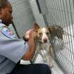 Animal Control Officer 2, Kenny Stevenson, puts a leash on Buster, a 3-year-old dog at the City of Edmond Animal Shelter in Edmond, Okla., on Wednesday, July 14, 2010. Photo by John Clanton, The Oklahoman