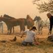 Community Photo By:  Mike Howard  Submitted By:  Mike, OKC Volunteers try and help the horses escape from the blazes in SE OKC.