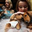 Dachshunds dressed for the occasion, Dee Dee, foreground left, and her cousin Clifford, foreground right, are held by their owner Valerie Diker, as they and other dogs and people wait for the start of the most expensive wedding for pets Thursday July 12, 2012 in New York. The black tie fundraiser, where two dogs were