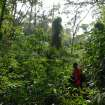 An ElderTreks guide searches for a trail in Uganda's Bwindi Impenetrable Forest. Photo courtesy of ElderTreks.