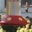 My brother had six hummingbirds at the bird feeder on his front porch this morning.  Look closely, and you'll see three of them in this picture.  Community Photo By:  Mark StCyr  Submitted By:  P, Edmond