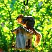A squirrel enjoys breakfast in a Norman backyard.  Community Photo By:  Robert Ferrier, Norman  Submitted By:  Robert, Norman