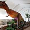 A Tyrannosaurus rex  is one of the dinosaurs on display at a new exhibit at the Oklahoma City Zoo in Oklahoma City on Wednesday, March 11, 2008. By John Clanton, The Oklahoman ORG XMIT: KOD