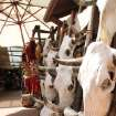 This July 14, 2010 image shows cow skulls for sale in one of the shops near the historic plaza in Santa Fe, N.M. A national historic landmark, the plaza has served as the commercial, social and political center of Santa Fe since the early 1600s. It plays host to art markets through the year and is home to the Palace of the Governors, the nation's oldest continuously occupied public building. (AP Photo/Susan Montoya Bryan)