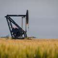 A pump jack operates in a northwest Oklahoma wheat field. [PHOTO PROVIDED]