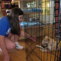 Photo - Rachel Rose of Oklahoma City visits with a puppy at the Central Oklahoma Humane Society's Adoption Center, 7500 N Western. The humane society is the recipient of Rose's bat mitzvah community service project. Photo by Carla Hinton