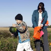 Photo - Austin Johnson, 8, of Greenfield, Ind., and his mother, Michelle, pick pumpkins Monday in a patch at the Tuttle Orchards, in Greenfield, Ind. The orchard had a good pumpkin crop but canceled public apple-picking this year after a series of subfreezing nights zapped apple blossoms lured into early bloom by unusually warm March weather. AP Photo