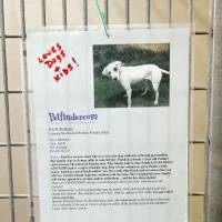 Photo - Hoping to increase adoption of unwanted  dogs, the Oklahoma City Animal Shelter is having a temporary promotion called