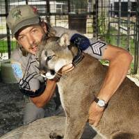 """Photo - Joe Schreibvogel hugs """"Sheba,"""" a North American mountain lion at the G.W. Exotic Animal Park in Wynnewood. obtained from a private breeder. Photo by Paul B. Southerland, The Oklahoman Archives"""
