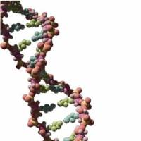 Photo - A DNA strand. File art.