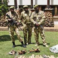 Photo - Kenyan Wildlife wardens keep a watch on confiscated elephant tusks at the Kenyan wildlife offices in Nairobi, Kenya, Wednesday, Jan. 16, 2013. Kenyan authorities  seized at least two tons of illegal Elephant ivory at the Kenyan port of Mombasa destined for Indonesia. Elephant poaching deaths are on the rise across Africa because of increased demand from Asia — and particularly from China.  (AP Photo/Khalil Senosi)