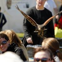 Photo - Raptors with the Royal Gauntlet show fly over the crowd Friday at the Medieval Fair in Norman.  PHOTO BY STEVE SISNEY, THE OKLAHOMAN  STEVE SISNEY -