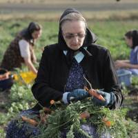 Photo -   This undated image released by National Geographic Channels shows Hutterite Judy Hofer picking carrots from the garden in King Colony, Mont.