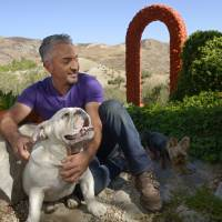 Photo -   In this Oct. 18, 2012 photo, Cesar Millan poses with his English Bull Dog George, left, and an unidentified dog at his Dog Psychology Center, in Santa Clarita, Calif. Millan's seventh book,