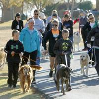 Photo - Dogs and their owners participate in the Doggie Dash 5k run at J.L. Mitch Park in Edmond. The event is a fundraiser created by a woman who is going to India to teach orphans. PHOTO BY PAUL HELLSTERN, THE OKLAHOMAN