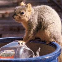 Photo - SQUIRREL