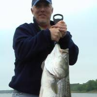 Photo -  Scooter Proctor of Norman with 35-pound striper caught on Red River below Lake Texoma dam