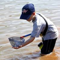 Photo - Zachary Geiser nets specimens during the Slime and Scales summer program  in Norman.  Photos by Steve Sisney, The Oklahoman