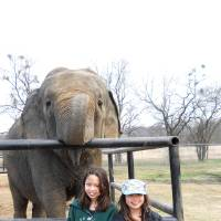 Photo - An elephant poses with Cricket Kaya, left, and Prairie Kei Kaya in Hugo at the Endangered Ark Foundation, established by circus pioneers as a sanctuary for Asian elephants. PHOTO PROVIDED.