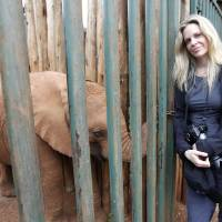 Photo - US actress Kristin Bauer van Straten visits the David Sheldrick Elephant Orphanage in Nairobi, Kenya, Saturday, Aug. 25, 2012. Bauer is a celebrity patron of the International Fund for Animal Welfare, IFAW, and is in Kenya to make a documentary that will highlight the threat to elephants and rhinos. (AP Photo/Sayyid Azim)