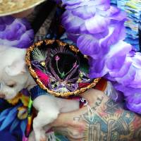 Photo -   Dennis Stone of Independence, Mo., holds his four-month-old Chihuahua, Cherry, Saturday, May 5, 2012 in Kansas City, Mo. Hundreds of tiny dogs dressed up like tacos, ballerinas and a variety of other things fell short of setting a world record, but organizers say they're encouraged by the turnout for the inaugural Cinco de Mayo Chihuahua parade. (AP Photo/The Kansas City Star, Jim Barcus)