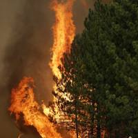 Photo - The Rim Fire burns along Highway 120 near Yosemite National Park, Calif., on Sunday, Aug. 25, 2013. With winds gusting and flames jumping from treetop to treetop, hundreds of firefighters have been deployed to protect communities in the path of the Rim Fire raging north of Yosemite National Park. (AP Photo/Jae C. Hong)