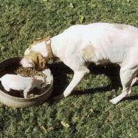 Photo - DOGS / PUPPY / PET TALES: Rosita, left, and Katie