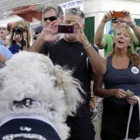 Photo - Fans line up to take photos of the Milwaukee Brewers unofficial mascot, Hank, during an exhibition spring baseball game against the Cincinnati Reds, Saturday, March 15, 2014, in Phoenix. (AP Photo/Morry Gash)